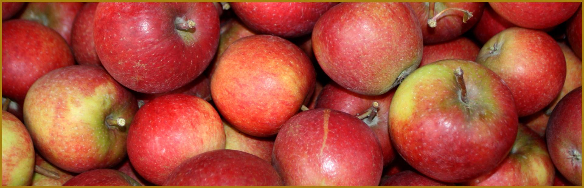 Kühnert Apfeltrester