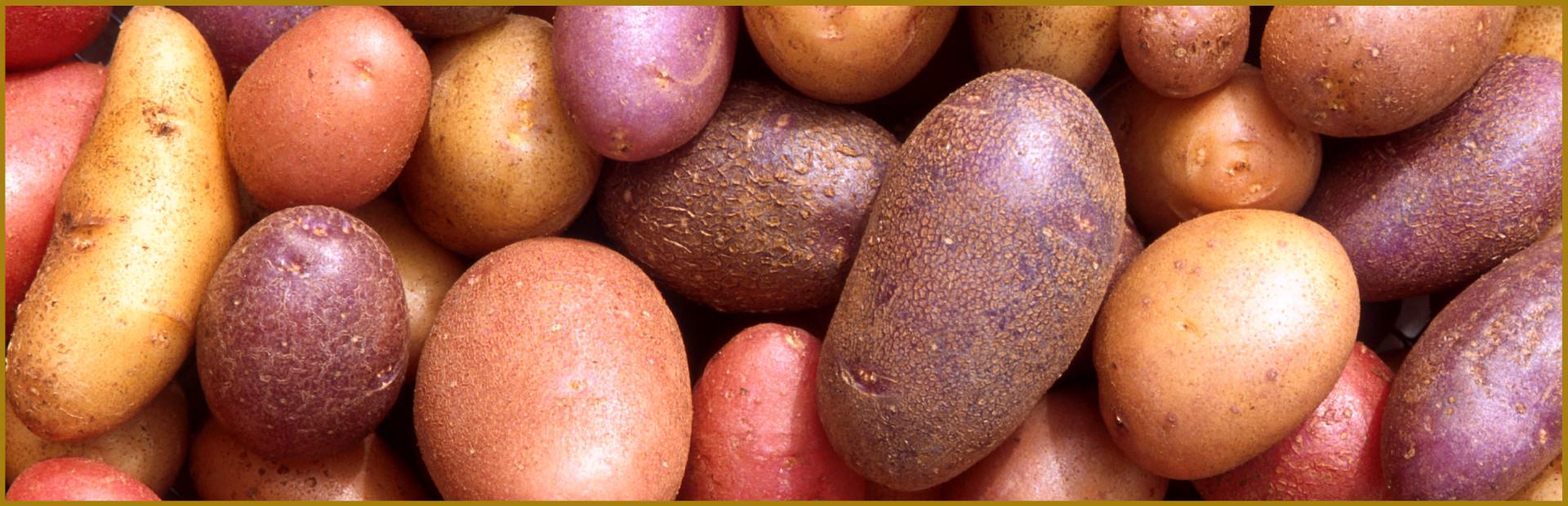 Kühnert Kartoffeldampfschalen